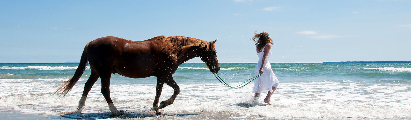 walking_horse_on_beach_header